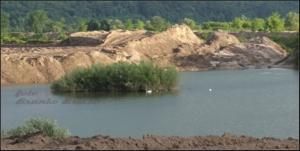 labodki na četrtem zasipavanje jezera 4 IMG_9274 (6)
