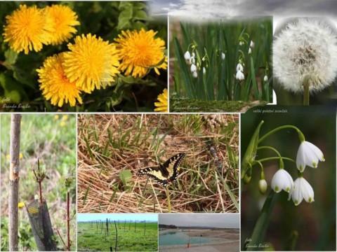 Nadomestni habitati za rastline – suhi travniki