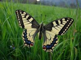 Fotografaska razstava o Vrbini in metuljih